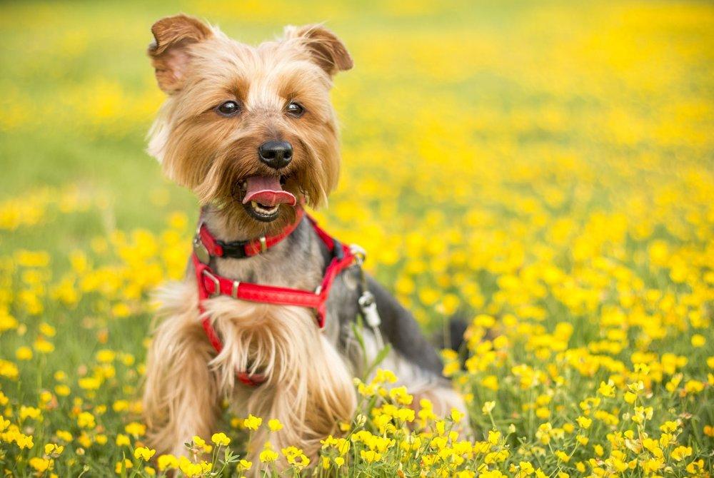 Spring dog.jpeg