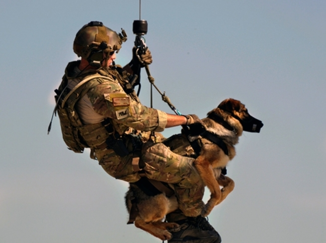Courtesy of: https://barkpost.com/10-things-about-military-dogs/
