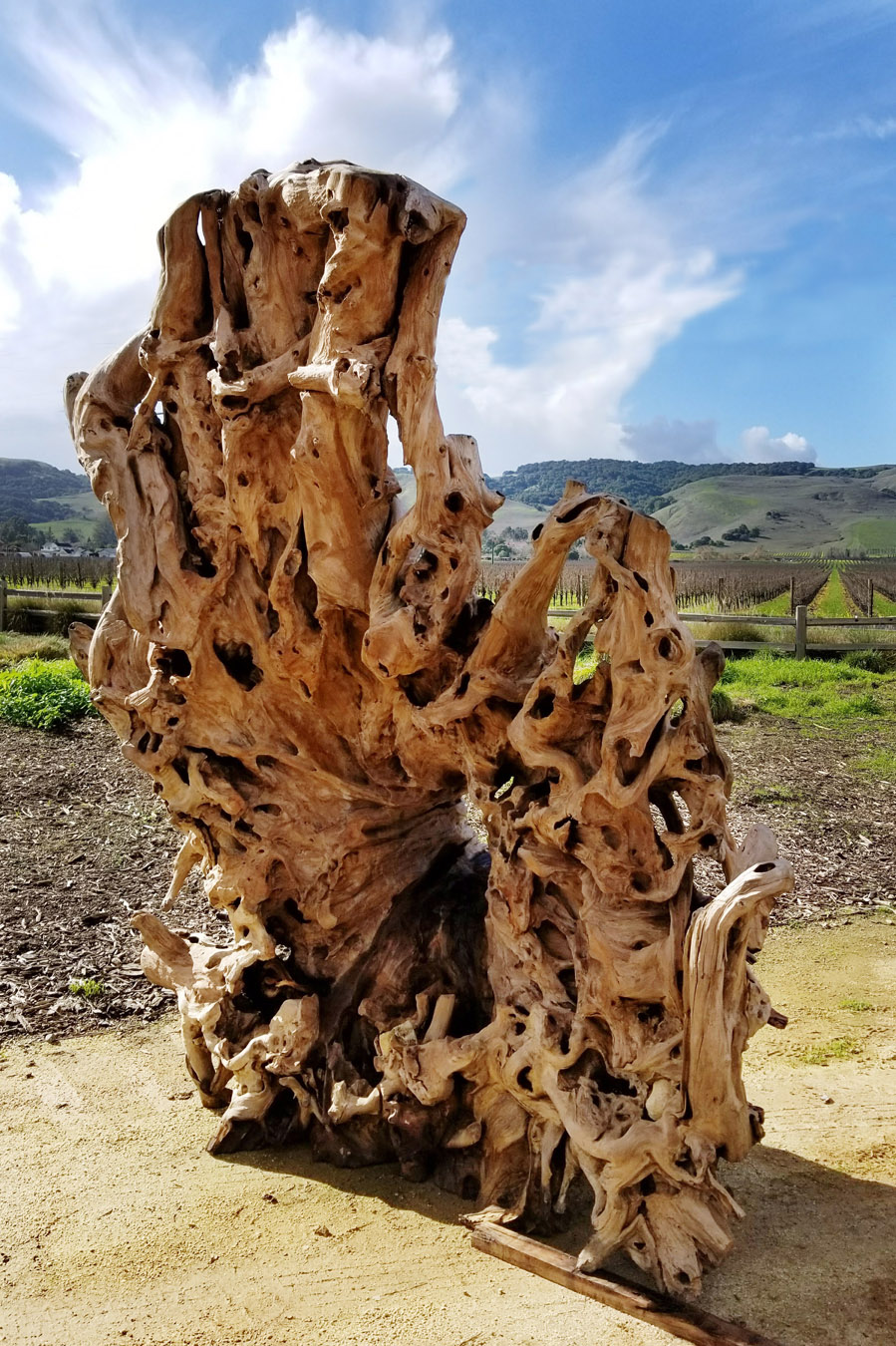 Artefact Design Teak Giant Root2.jpg
