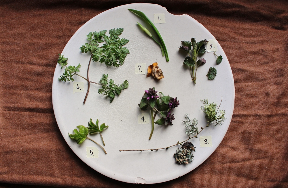 The Foraging Cheat Sheet