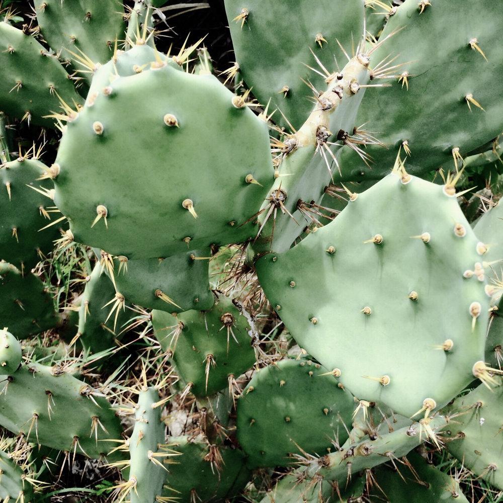 1-cactus.jpg