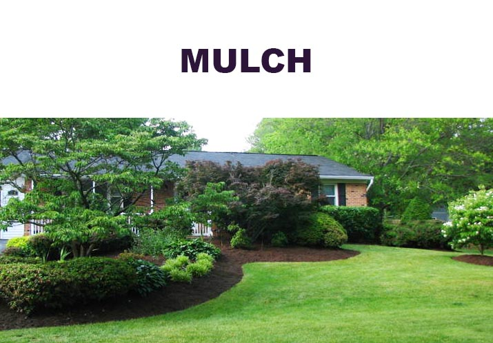 6-Edging-and-Mulching.jpg