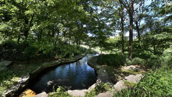 Columbus Park Natural Area-023-Spring062416-DSC-7067 .jpg