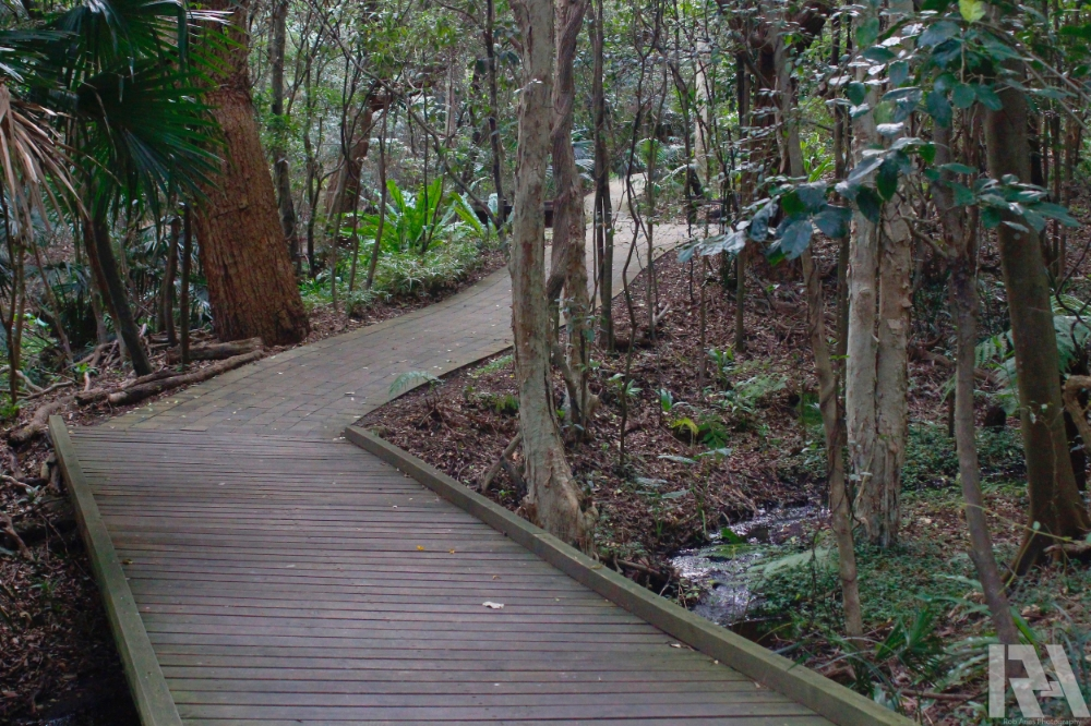 Path in the Jungle