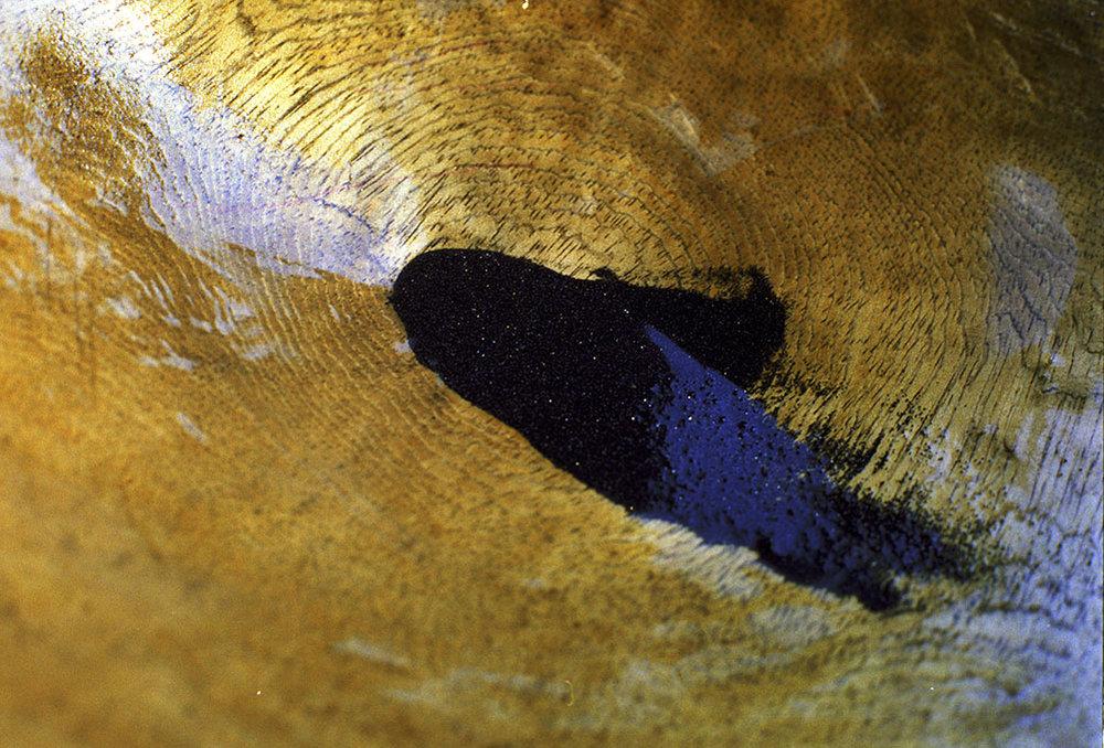Gold in artesanal miner's pan El Palo, Cauca.