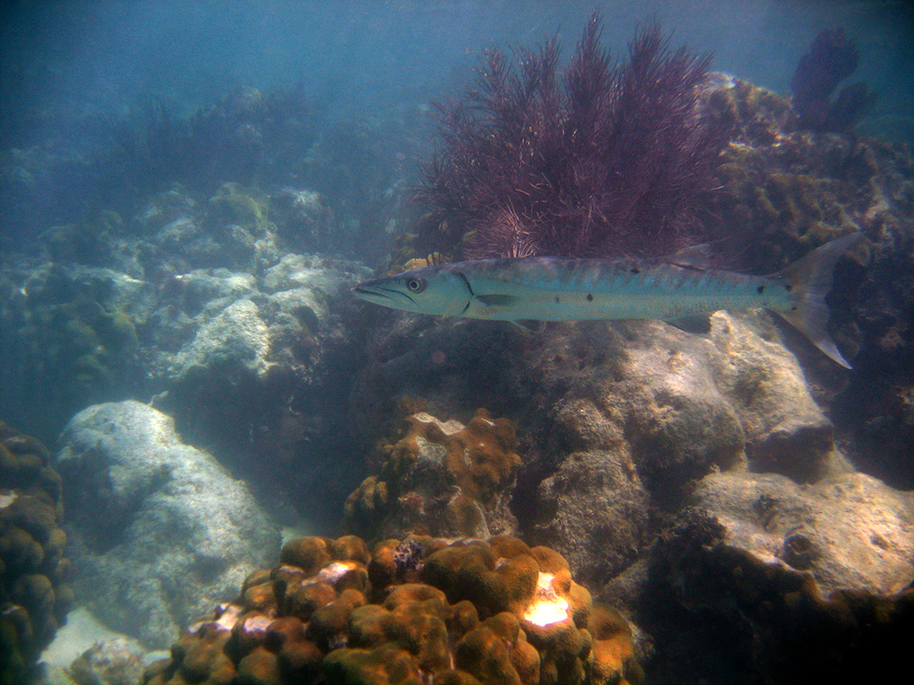 Complete Your Trip With Snorkeling In Key West!     Your island experience in Key West will be incomplete without snorkeling in the clear blur water. It is named among the most adventurous activities that tourists participate in whilst on an island trip. Key West snorkeling offers a complete package that makes for a spectacular experience under the sea. Enjoy a once in a lifetime contact with diverse marine life and be enthralled by sightings of the famous humpback dolphin in the crystal clear blue waters of Key West.    Make your stay in Key West more enjoyable with the abundance of the sea through some relaxed fishing. And what can be better than eating the in dinner that you caught in daytime. Taste the extravagant fishes freshly caught from the sea, cooked with delicious local spices and herbs.     Are you a first time snorkeler? No problem! We are there to help you as our activities are first timer-friendly, and we take great care with guiding you with the utmost care.