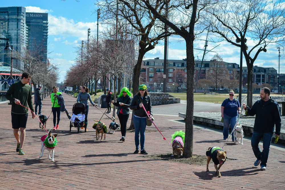 St. Pitties Day Parade 3.17.19 - 001.jpg