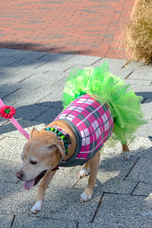 St. Pitties Day Parade 3.17.19 - 010.jpg