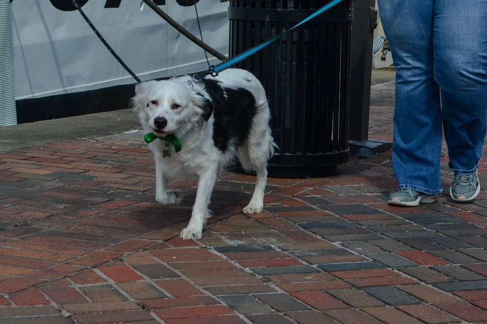 St. Pitties Day Parade 3.17.19 - 017.jpg