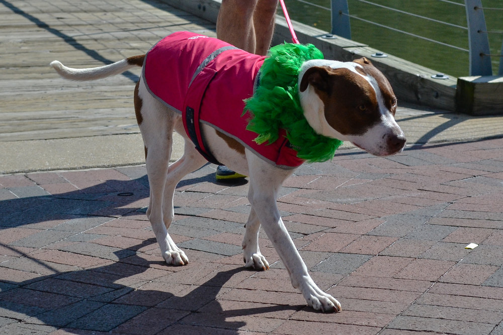 St. Pitties Day Parade 3.17.19 - 022.jpg