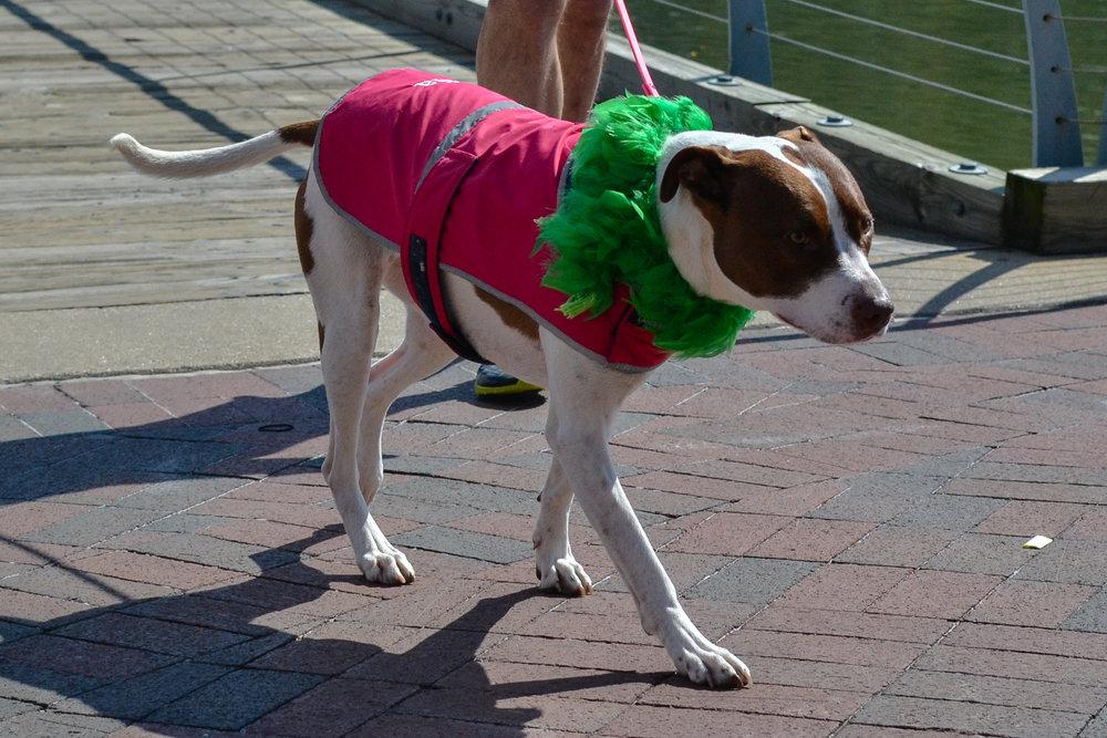St. Pitties Day Parade 3.17.19 - 022.jpg