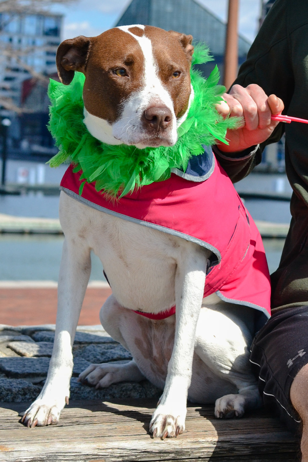 St. Pitties Day Parade 3.17.19 - 031.jpg