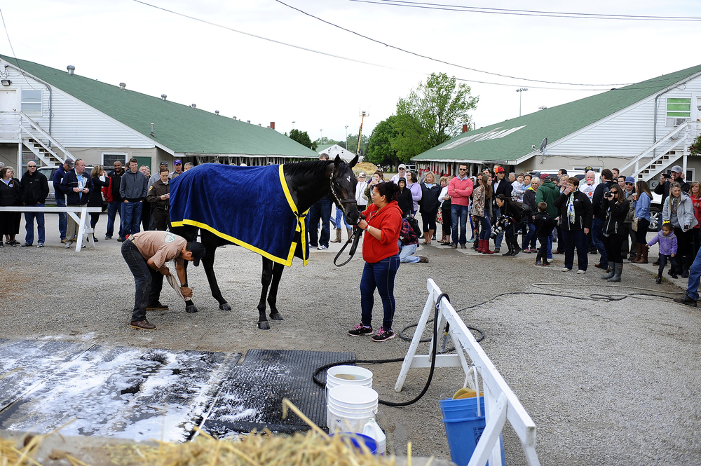 Kentucky Derby horse Mor Spirit trained by Bob Baffert receives a bath after his morning workout at Churchill Downs on Wednesday, May 4, 2016.