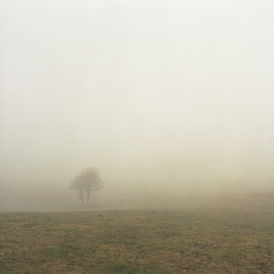fog and tree.jpg