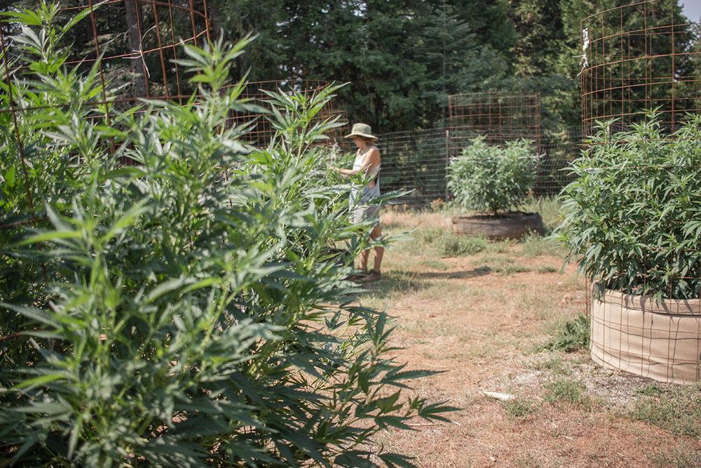 2-weedsm.jpg