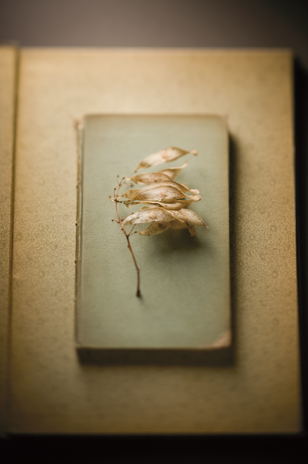 Product Photography Still Life Derek Israelsen 010 Leaves On Book
