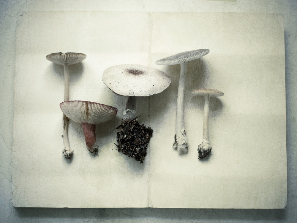 Product Photography Still Life Derek Israelsen 022 Fresh Mushrooms