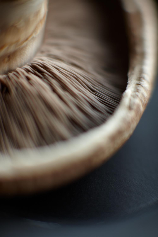 Product Photography Still Life Derek Israelsen Mushroom Closeup