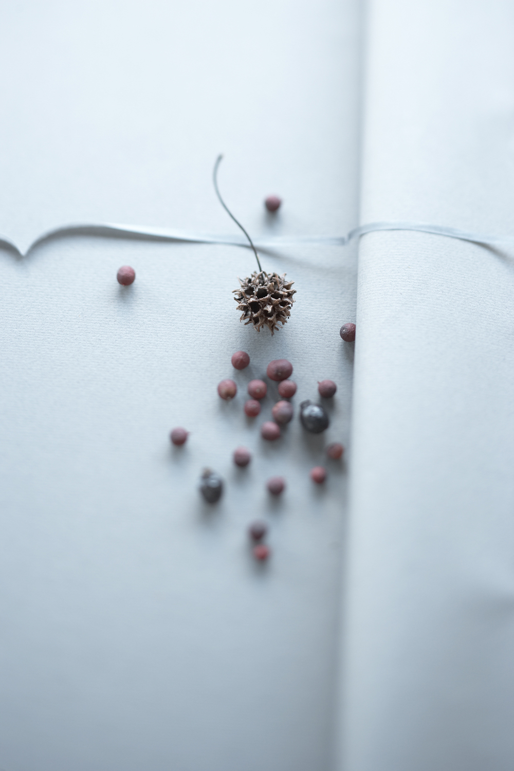 Product Photography StillLife Derek Israelsen Berries