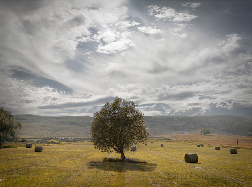 Travel Photography Derek Israelsen 044 Tree Landscape