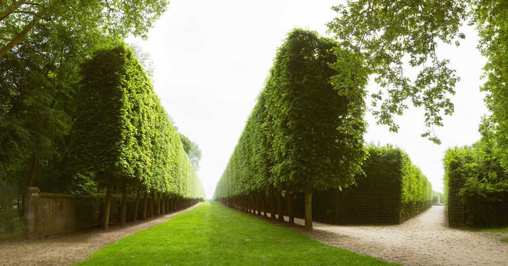Travel Photography Derek Israelsen 054 Versailles Row of Trees