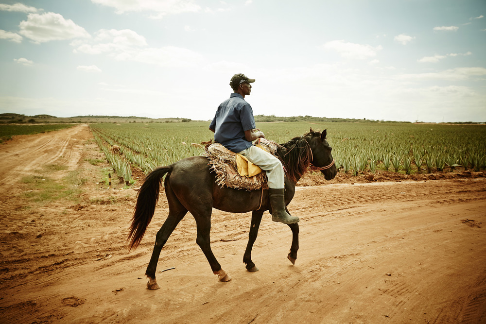 Travel Photography Dominican Republic Derek Israelsen Riding Horse