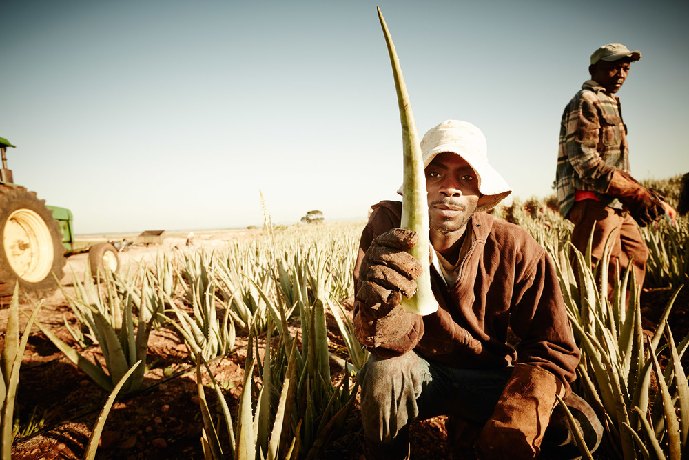 Travel Photography Dominican Republic Derek Israelsen Holding Aloe