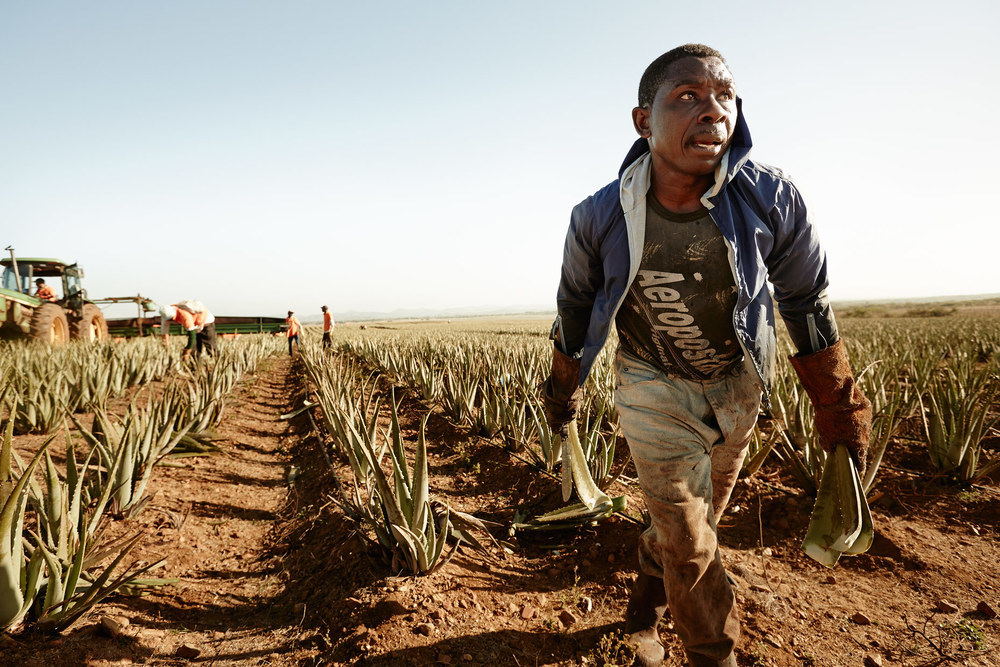 Travel Photography Dominican Republic Derek Israelsen Farming Aloe