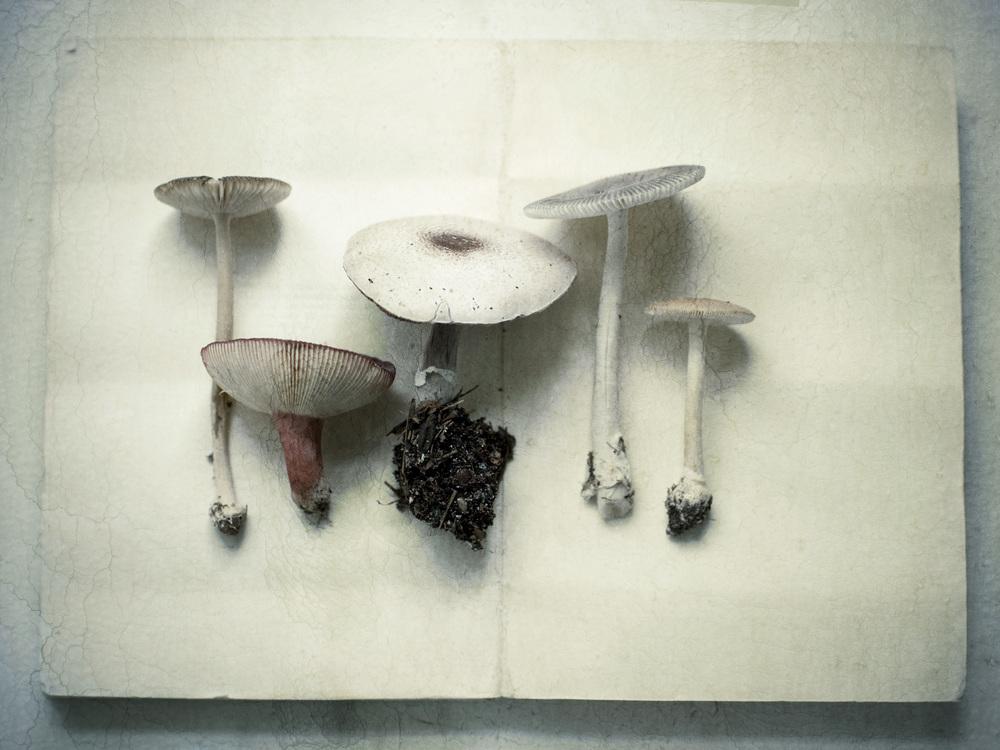Product Photography Still Life Derek Israelsen Fresh Mushrooms