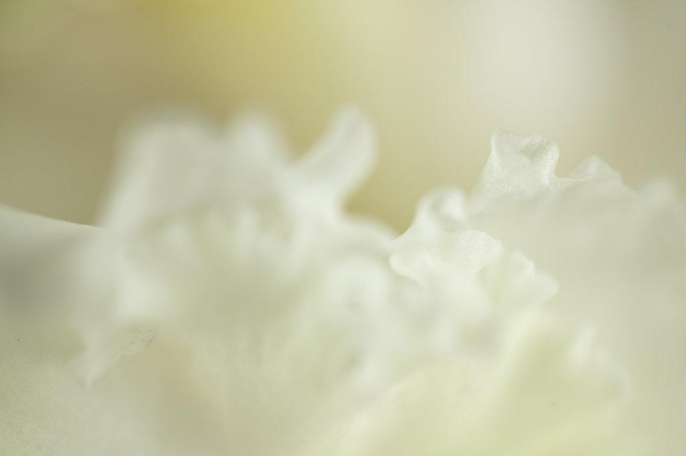 Flowers-073.jpg