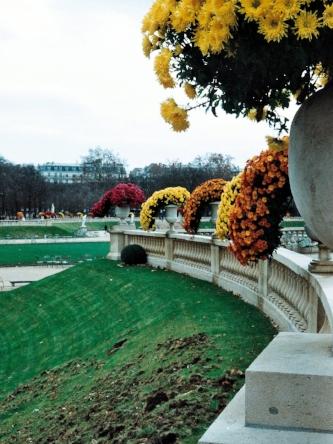 Luxembourg gardens mums.JPG