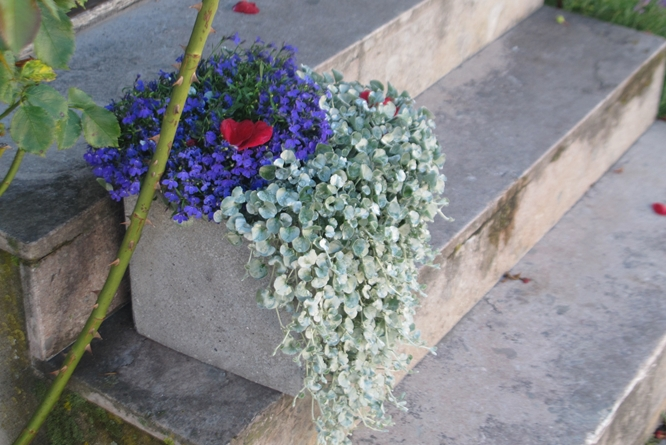 flowers visby gotland sweden