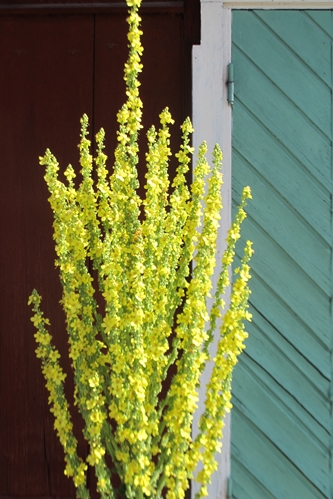 w333 17 Flower-broom.jpg