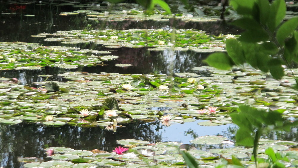 Water lilies at Giverny.
