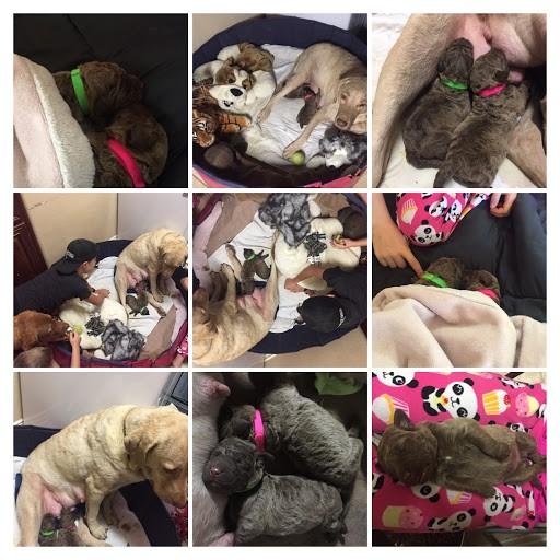 Sisters collage.jpg