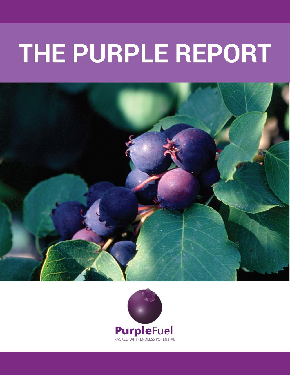 The purple report cover.jpg