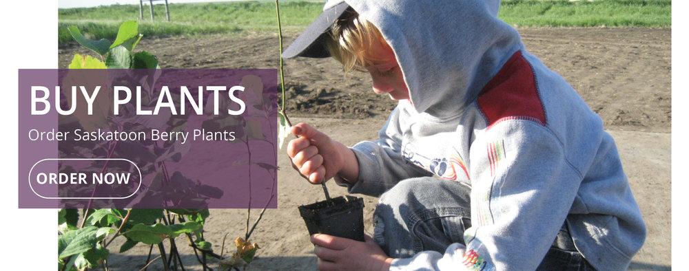buy plants banner slideshow .jpg