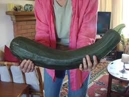 Zucchini can grow seriously large.
