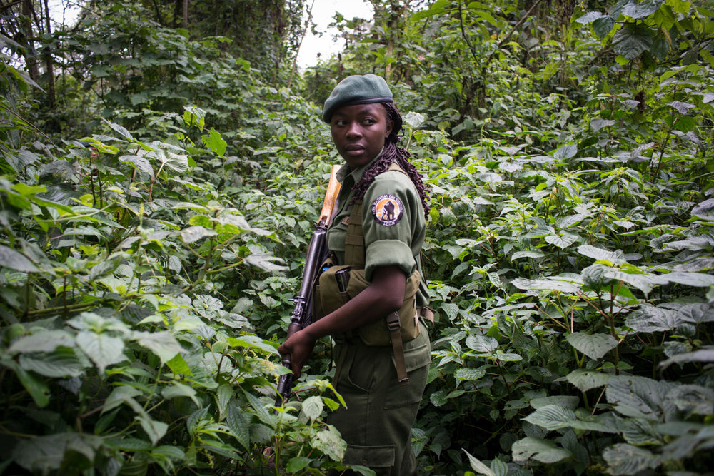 For the first time, women have taken up the most dangerous job in wildlife, becoming para-military rangers at the Virunga National Park in DR Congo. Virunga is Africa's oldest national park and home to over 200 of the world's 800 remaining mountain gorillas.