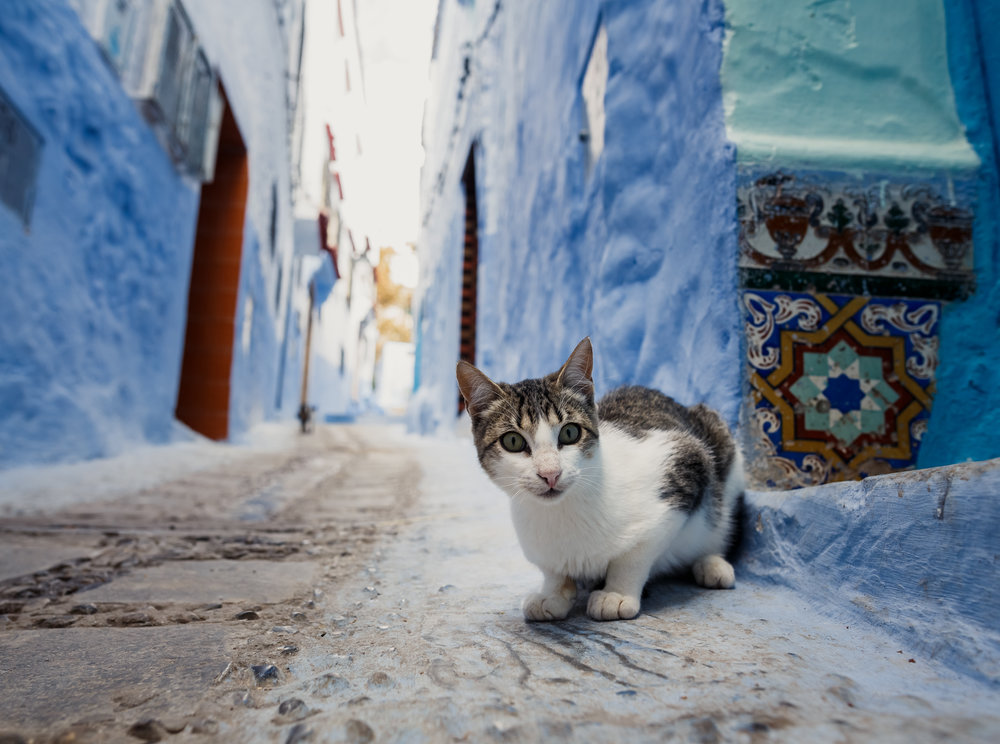 9-Day Group Tour Chefchaouen to Sahara