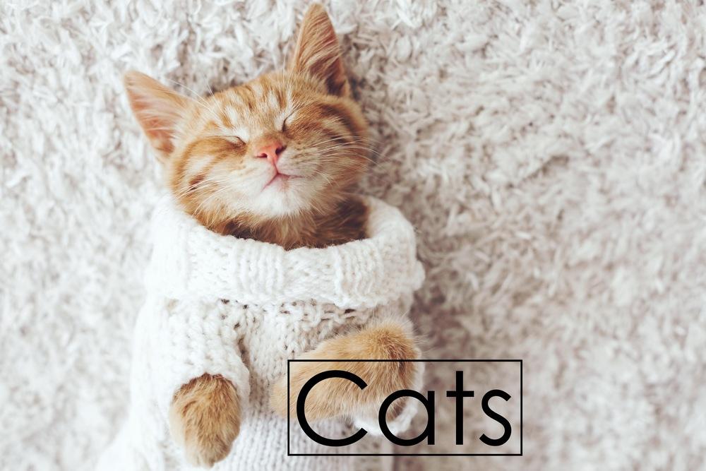 Comfy Cat.jpeg