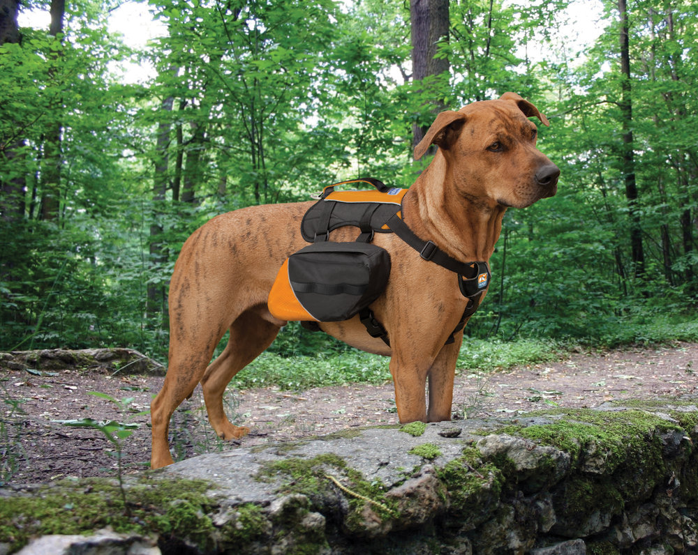 kurgo backpack 5.jpg