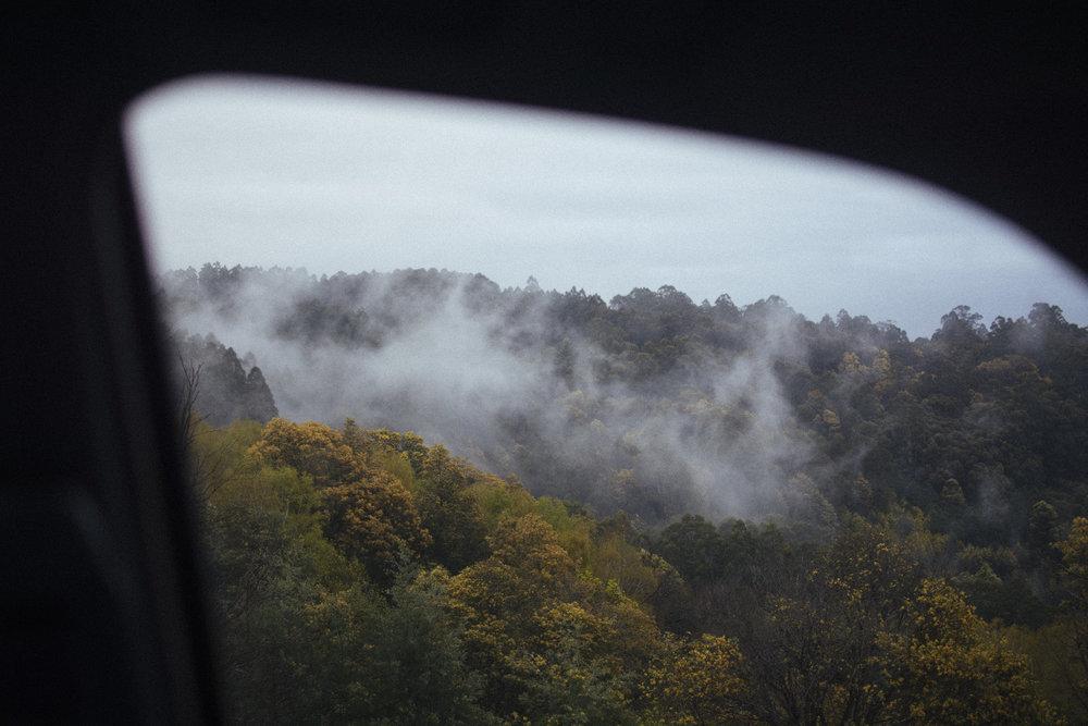 RJ Hamer Arboretum, Olinda, September 2015