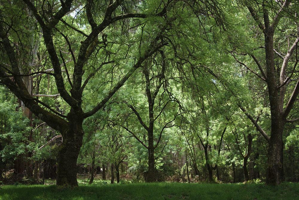 RJ Hamer Arboretum, Olinda, October 2015