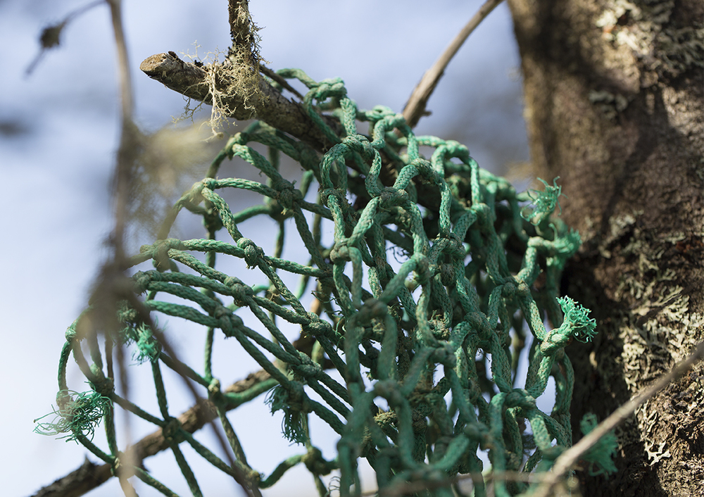An old fishing net caught in a tree in the Gabarus Wilderness