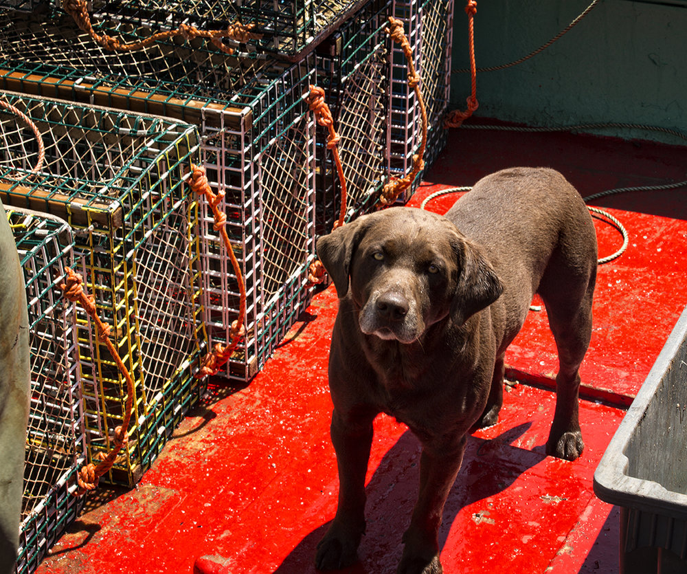 "I met Luke the lobster dog on a boat in Main a Dieu, Cape Breton.  He goes out every day with his dad, Brian Wadden, Sr.  ""Luke doesn't eat a thing or drink a thing when he is lobster fishing.""  I think Luke has figured out the key to avoiding being seasick.  What do you think?"