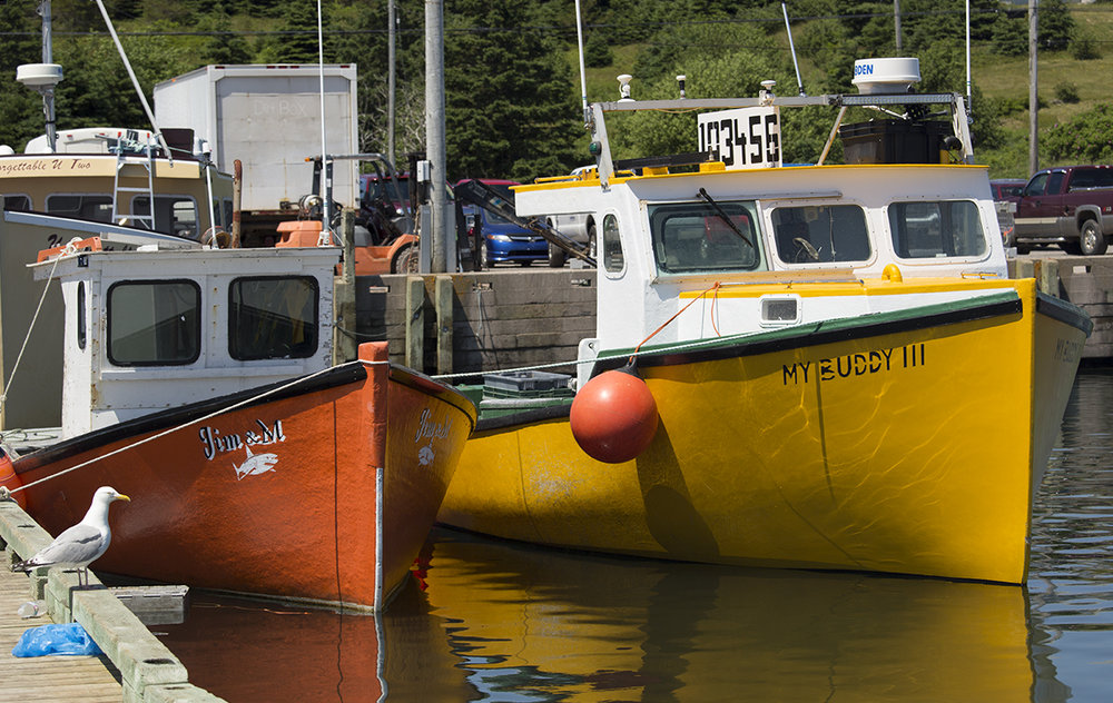 All the lobster boats are bright, saturated colors.