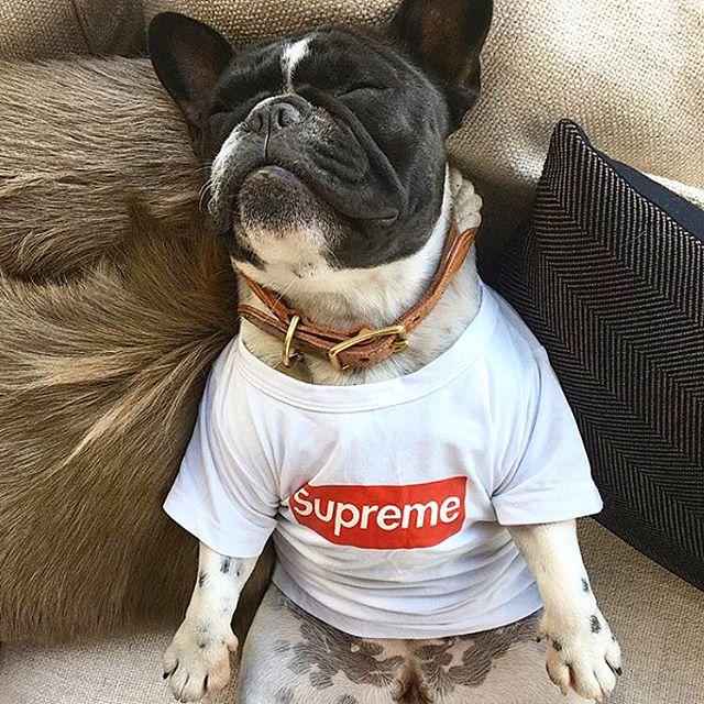 Fourtwo showroom/Nail salon.  #fourtwocollections #doglife #cushions #dogstyle #supreme #dogmanicure