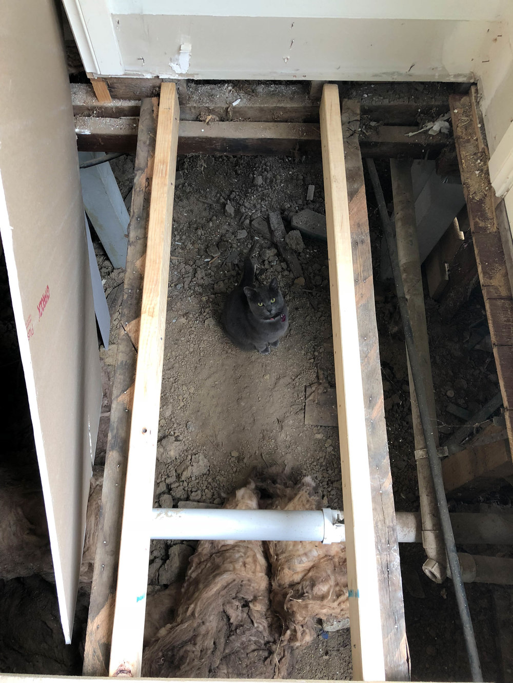 The cats LOVED have free reign underneath the house for a few nights while the floor was open!