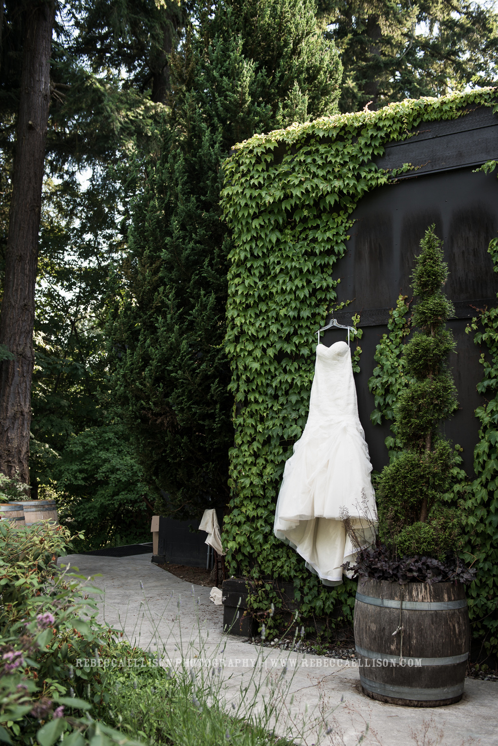 Wedding dress hanging in ivy |JM Cellars Wedding | Intimate Winery Wedding | Seattle Wedding Photographer | www.rebeccaellison.com
